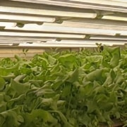 Conveyors for Indoor farming